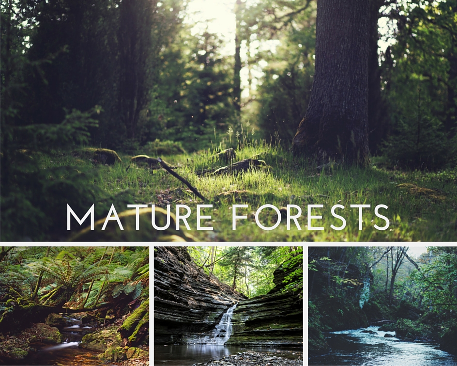 Mature-forests