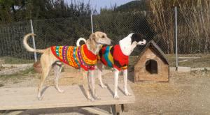 our_warm_greyhounds